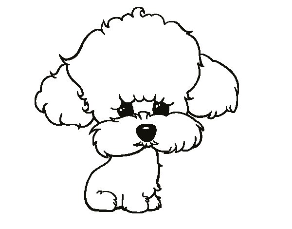 puppy poodle coloring page