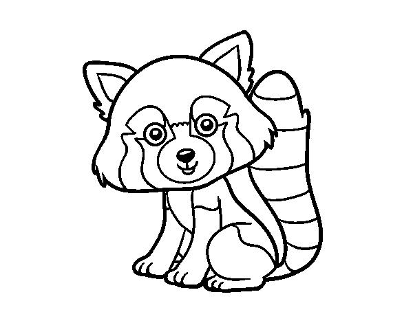 Red panda coloring page - Coloringcrew.com