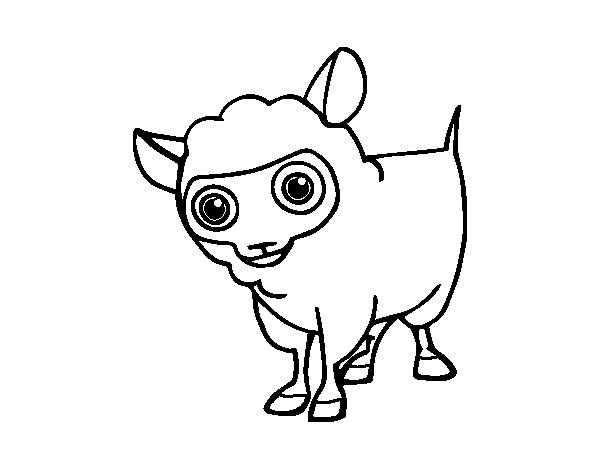 Sheep wool coloring page