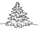 Silver fir coloring page