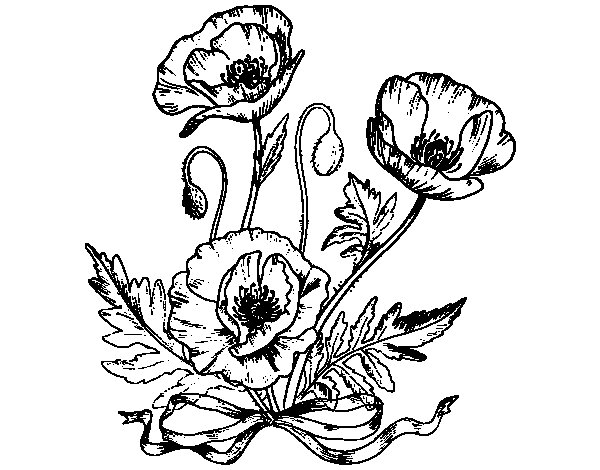 Some poppies coloring page