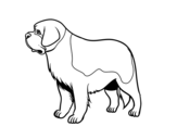 St. Bernard dog coloring page