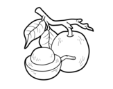 Tallow wood coloring page