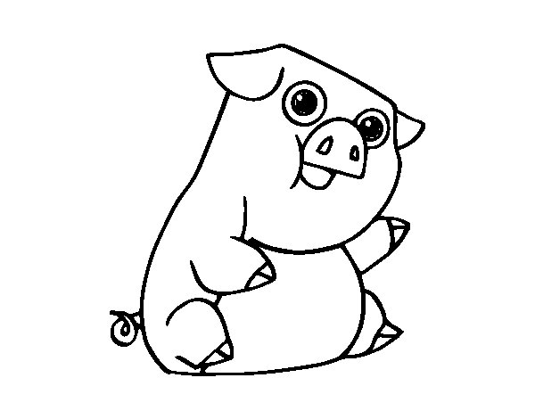 The domestic pig coloring page