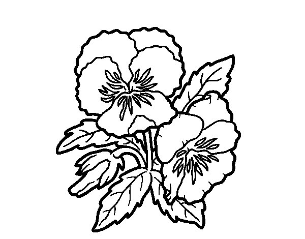 Thought flower coloring page