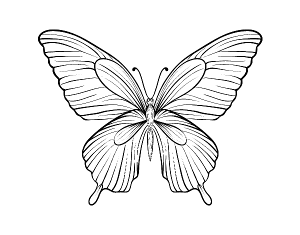 Tropical butterfly coloring page