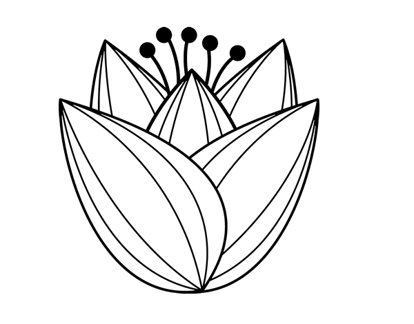 Tulip flower coloring page Coloringcrew
