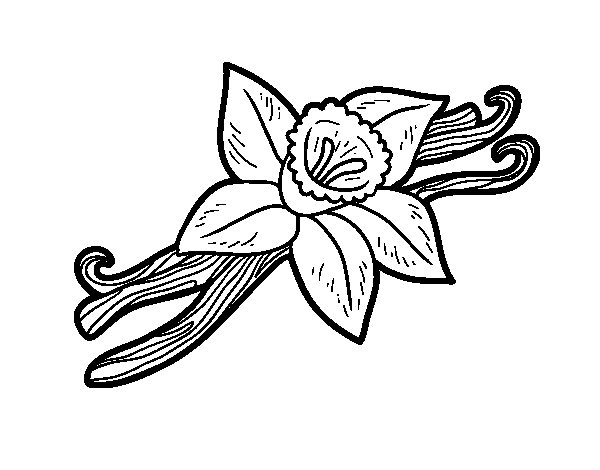 Olive Coloring Page