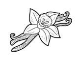 Vanilla coloring page