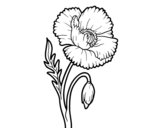 Wild Poppy coloring page