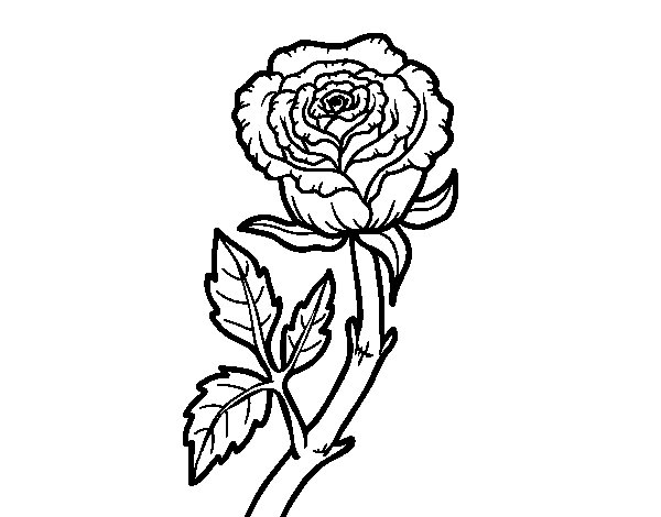 Wild rose coloring page