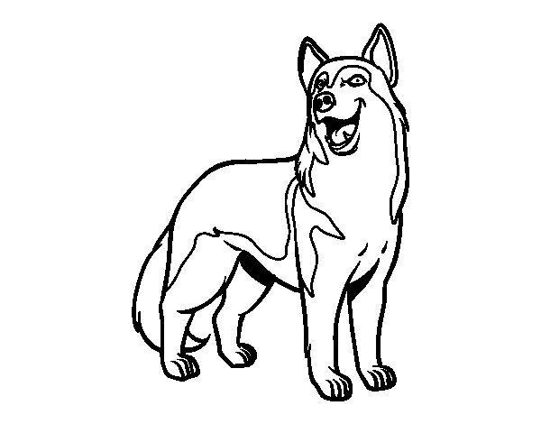Wolfdog coloring page