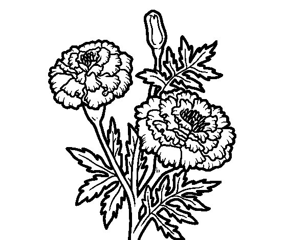 Wonder flower coloring page