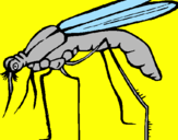 Coloring page Mosquito painted byAnita