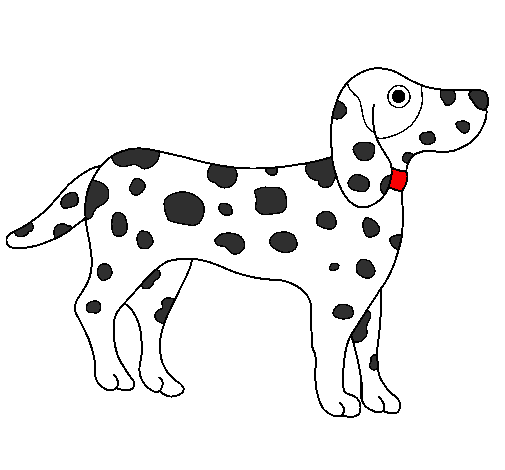 Dalmatian Colored By Grady Rose Spot On August 10 2010