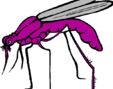 Coloring page Mosquito painted byanimal
