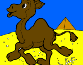 Coloring page Camel painted bygerardo