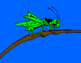 Coloring page Grasshopper on branch painted byNoah