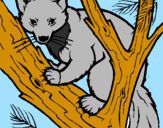 Coloring page Pine marten in tree painted bygabriel