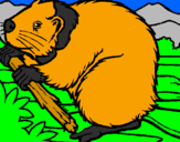 Coloring page Beaver  painted byjorge