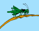 Coloring page Grasshopper on branch painted byana luiza