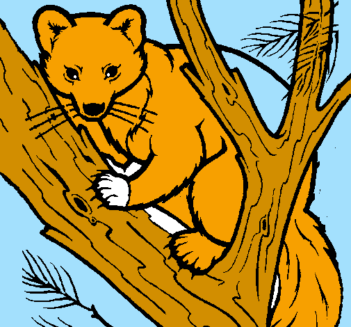 Coloring page Pine marten in tree painted byjack