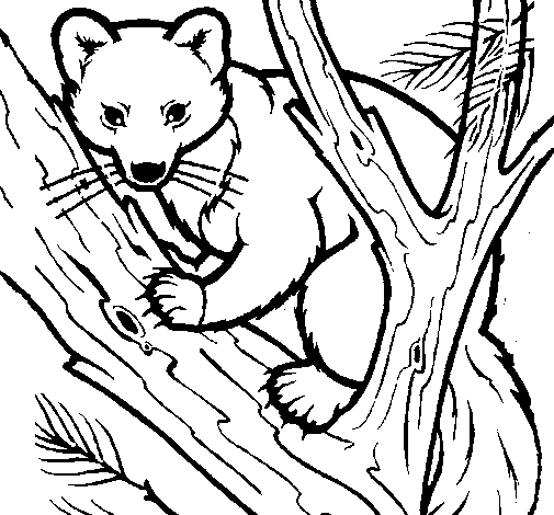 Coloring page Pine marten in tree painted byHeather