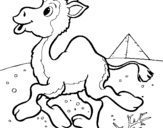 Coloring page Camel painted byTaylor