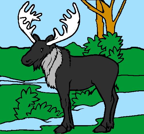 Coloring page Moose painted byMarga