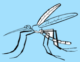 Coloring page Mosquito painted byeric