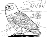 Coloring page Snowy owl painted byyuan