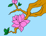 Coloring page Almond flower painted byDANI