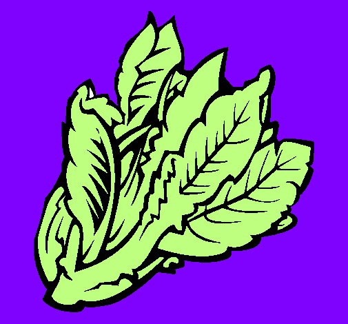 Coloring page Lettuce II painted byANA SOPHIIA