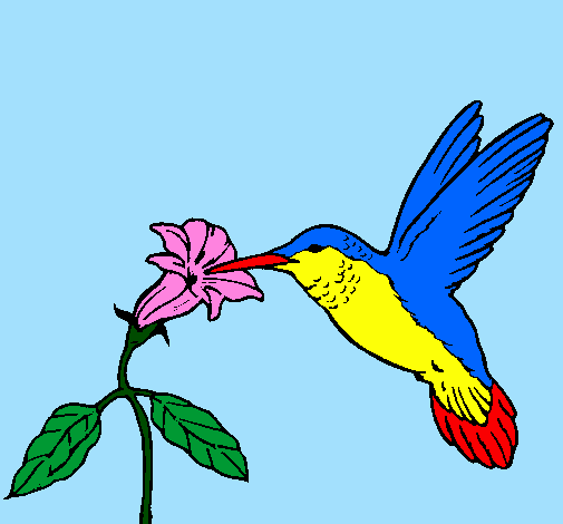 Colored page Hummingbird and flower painted by lalachika