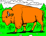 Coloring page Buffalo painted bylucas