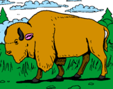 Coloring page Buffalo painted bylalachica