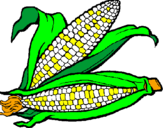 Coloring page Corncob painted byErin