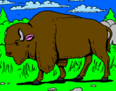 Coloring page Buffalo painted bypedro