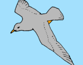 Coloring page Seagull painted bypedro