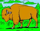 Coloring page Buffalo painted byfdlhmkdgld,m