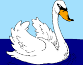 Coloring page Swan in water painted bypedro   gustavo