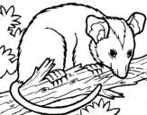 Coloring page Possum painted byhellen