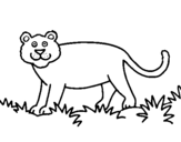 Coloring page Panthera painted bypedro