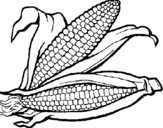 Coloring page Corncob painted byK