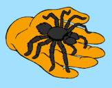 Coloring page Tarantula painted byline