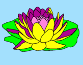 Coloring page Nymphaea painted bysandy
