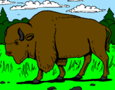 Coloring page Buffalo painted bymarcio