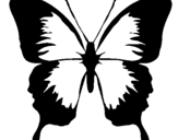 Coloring page Butterfly with black wings painted by06470639
