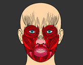 Coloring page Facial muscles painted byBigricxi