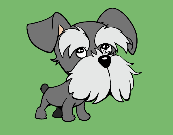Coloring page Schnauzer painted byShelbyGee